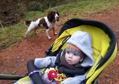 Local woods with spaniels. November 2013